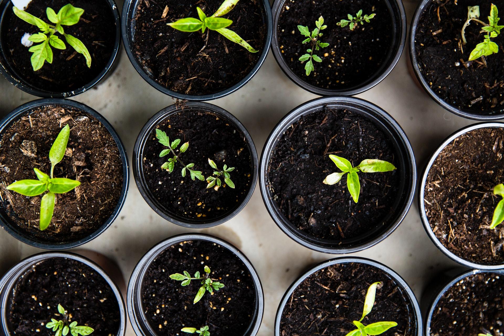 Met vruchtbare grond, liefdevolle aandacht en tijd komt een zaadje tot bloei.