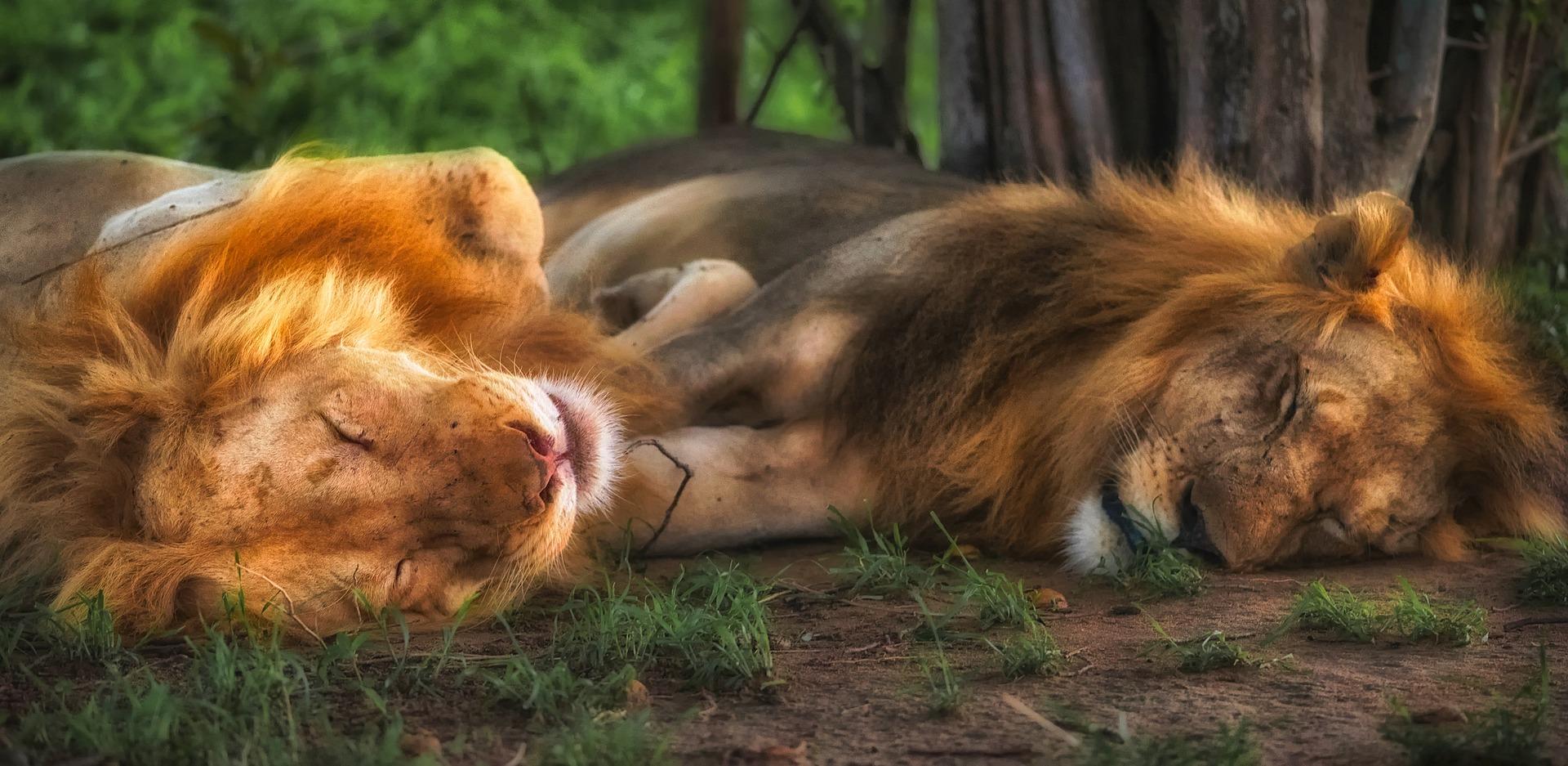 Beren en leeuwen op je weg temmen vraagt moed.