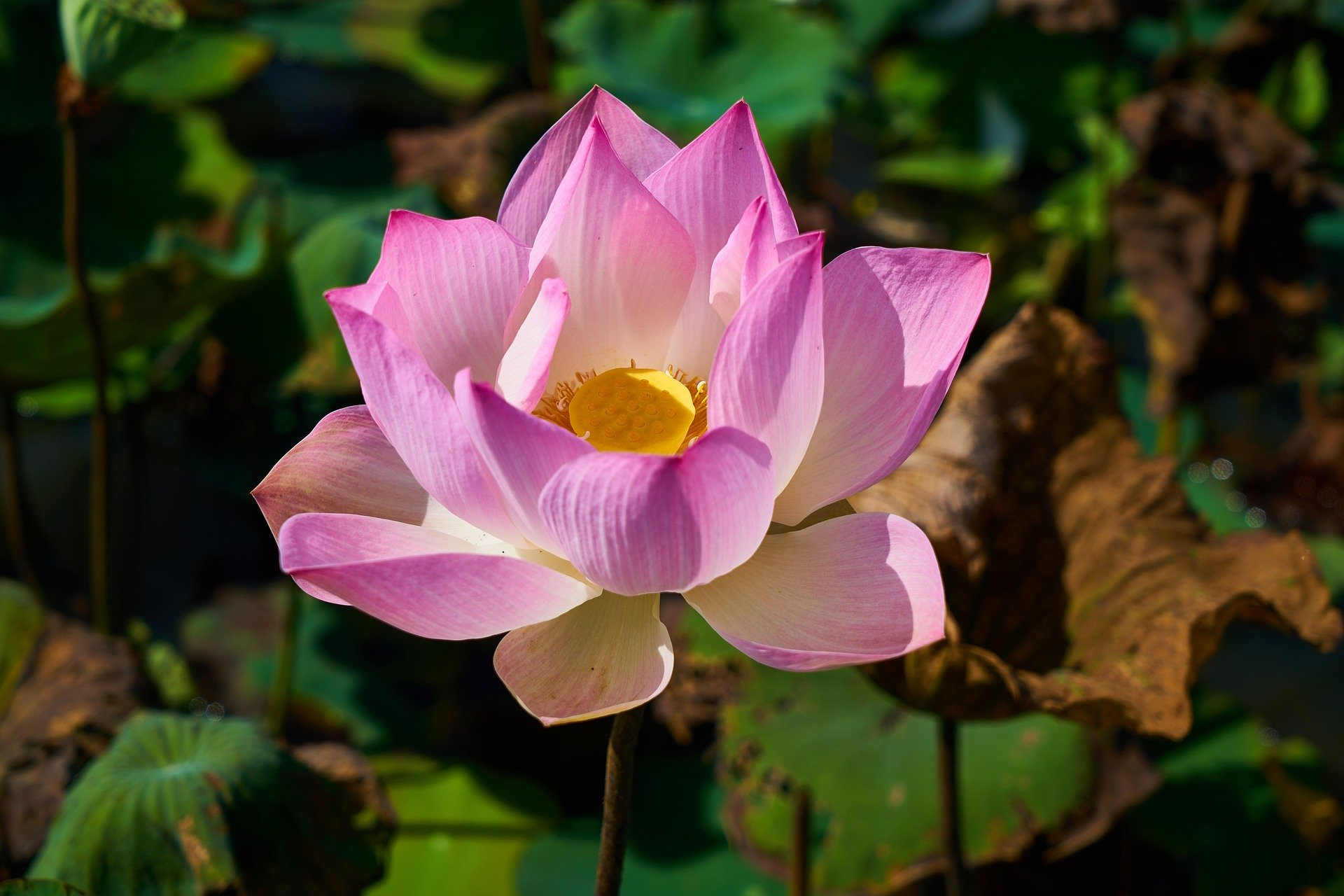 Peace of mind: ter inspiratie